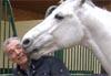 betisier-equestre