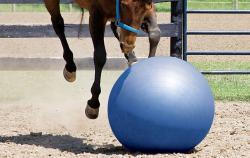 Ballon éthologique